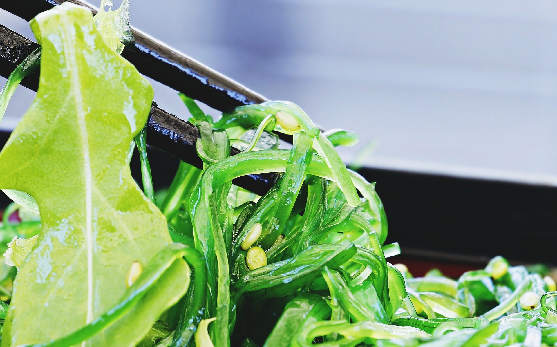 食物繊維~生理活性、海藻、ダイエット~